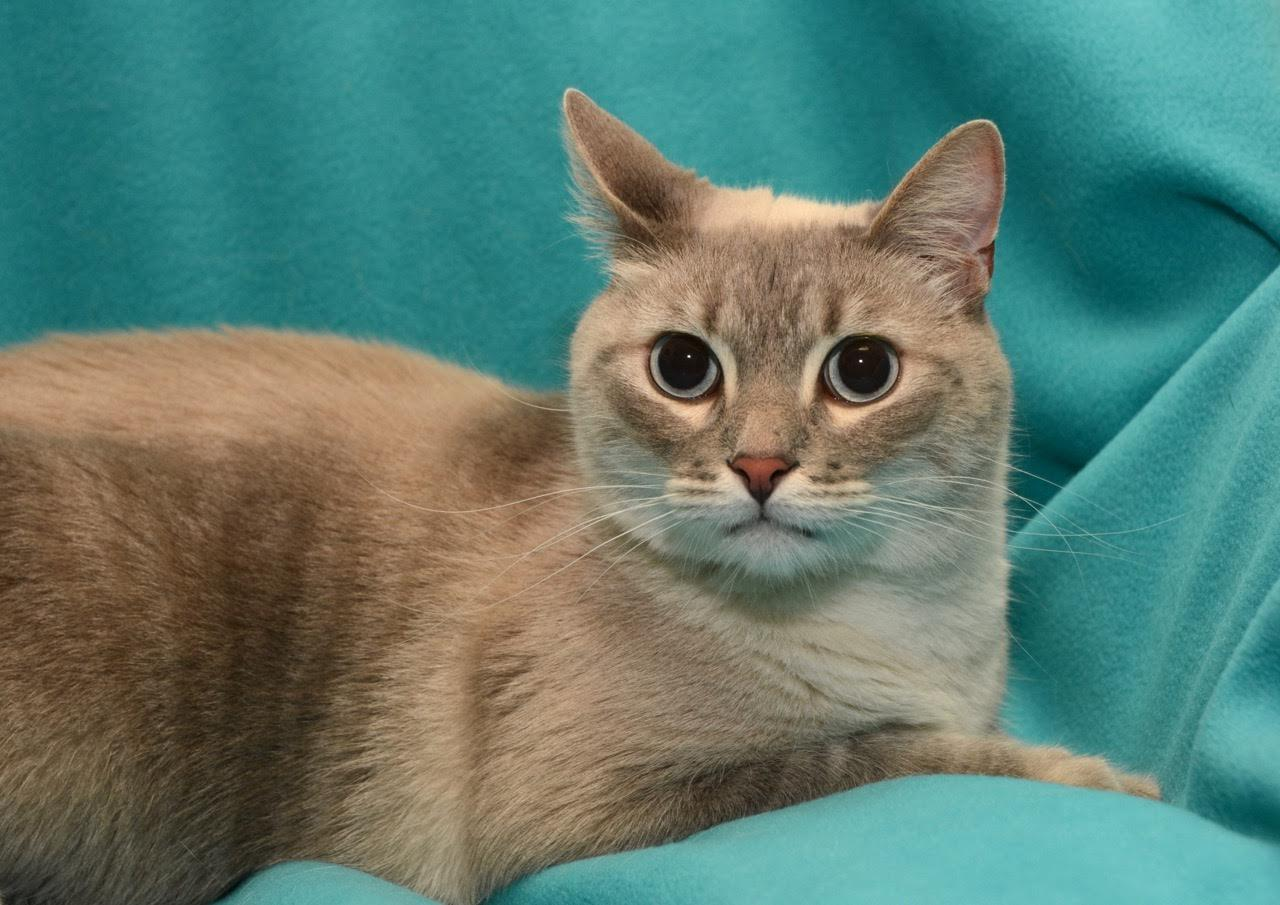 Jenks The Handsome Declawed Cat S Web Page