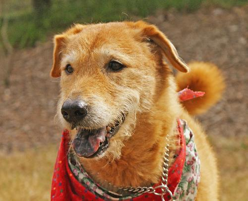 Jenny the Airedale Mix's Web Page