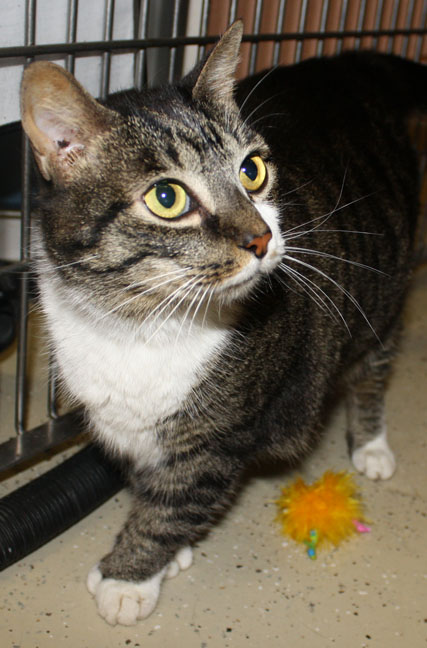 Mittens the Playful Cat (VIDEO)'s Web Page