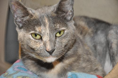 Ivy The Dilute Calico S Web Page