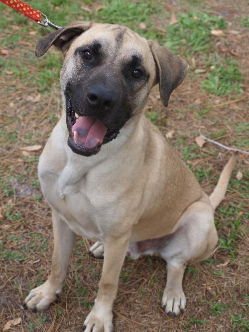 Jay the Mastiff Mix's Web Page