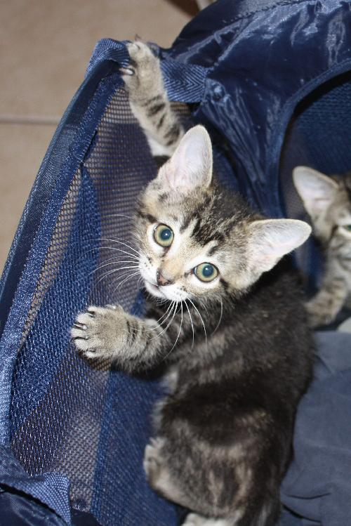 how to raise a kitten to be cuddly