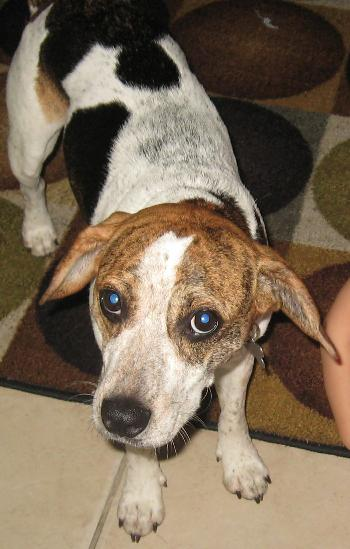 Marcus The Kid-Friendly Beagle's Web Page