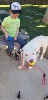 Opal - I Need a Foster!