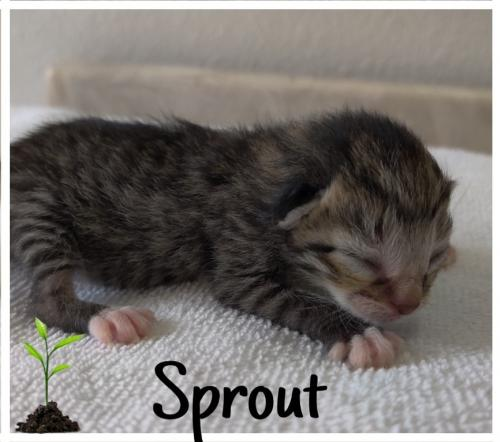 Sprout (MRM) 3.27.2020