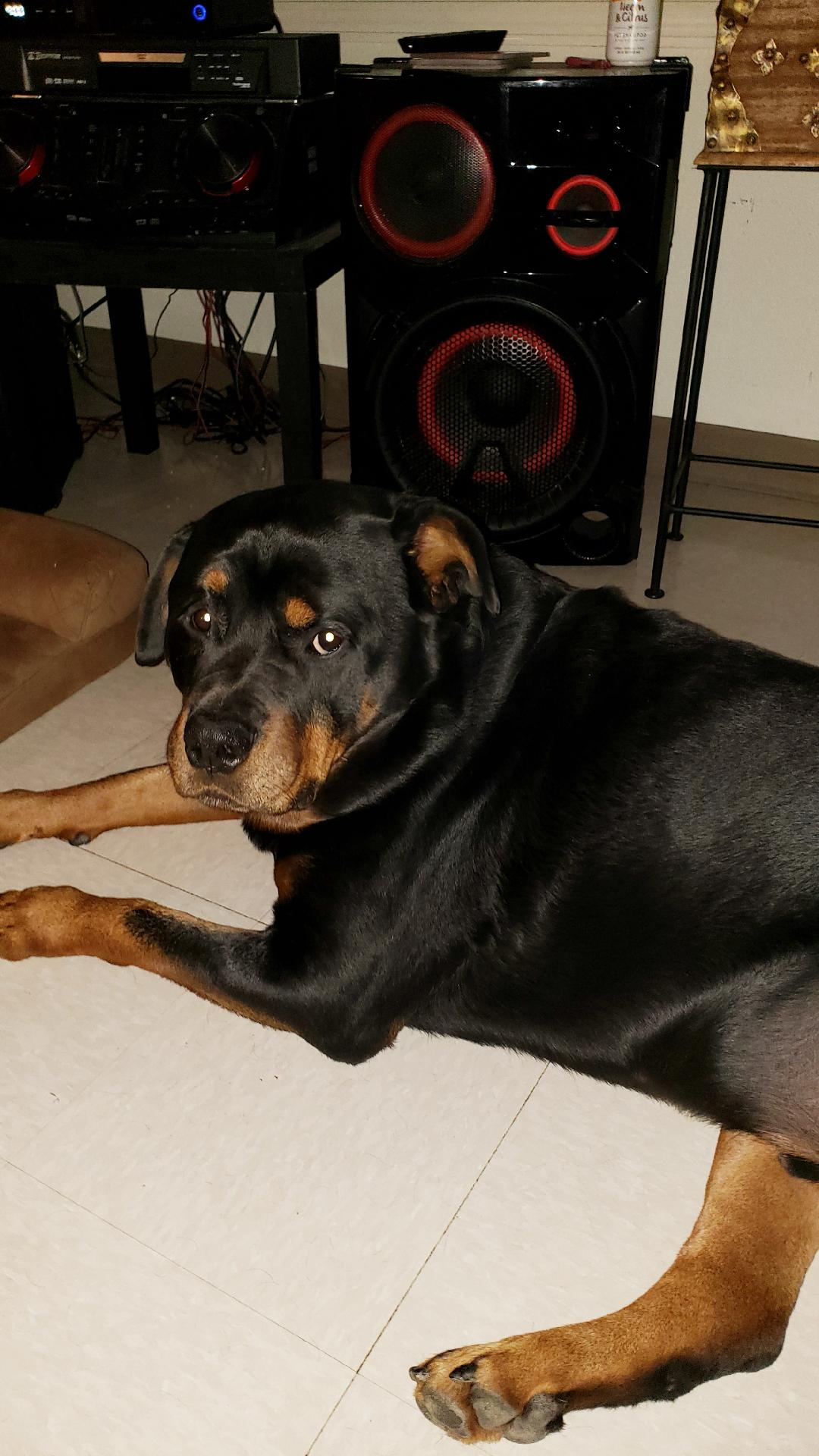 adoptable Dog in Mills, WY named Tank/Referral