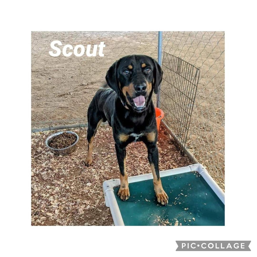 adoptable Dog in Mills, WY named Scout/Referral