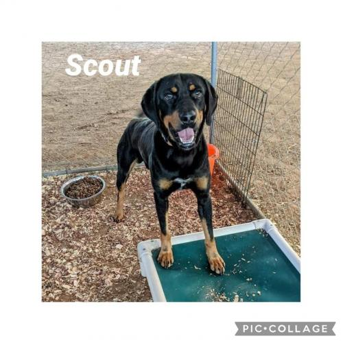 Scout/Referral