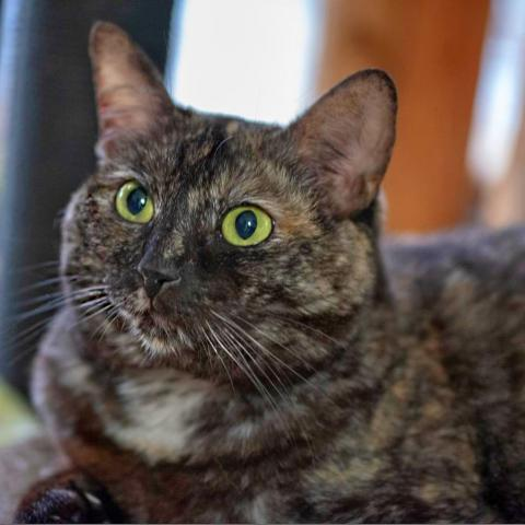 Lily Torti