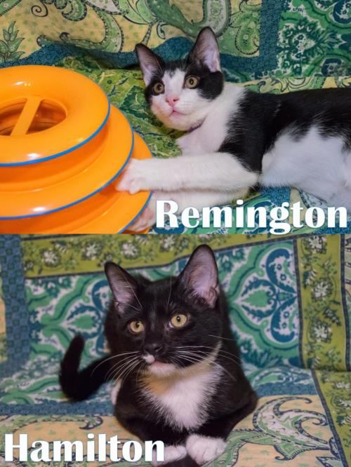 Hamilton & Remington