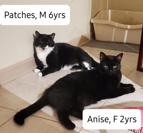 Anise & Patches (Guests)
