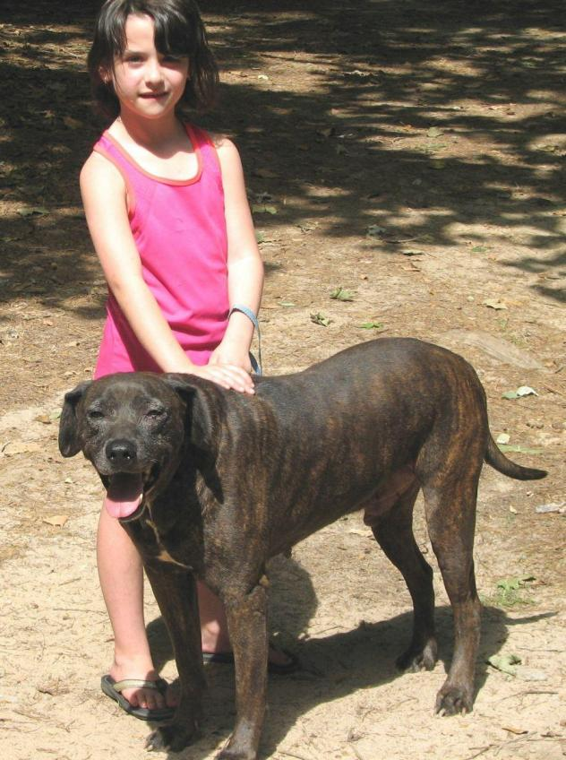 Tennessee Dog Rescue Groups
