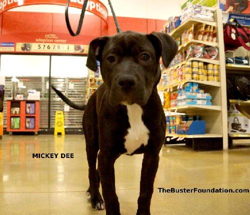MICKEY DEE (FOSTER NEEDED)