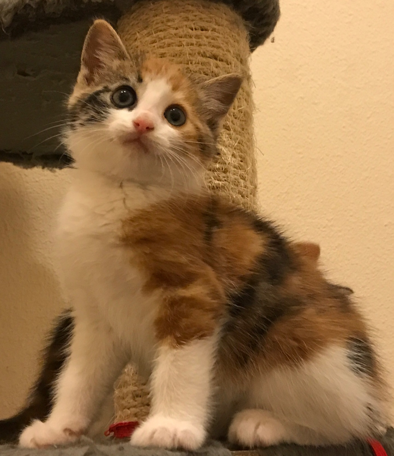Chloe the loving Calico\'s Web Page
