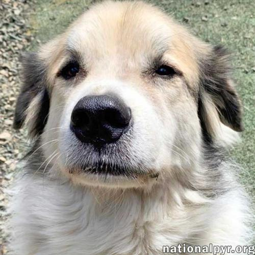 Bandit in PA - Wants to Be Your One & Only