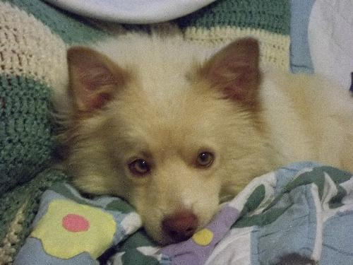 Dog Rescue Groups In Columbia Sc