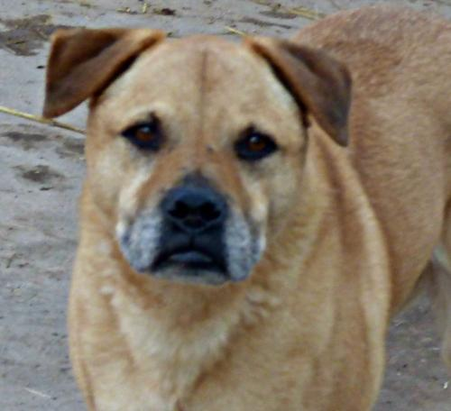 **TINKERBELL- Perfect, loyal, loves people/crowds