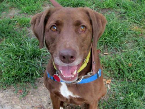 adopt MS PENNY