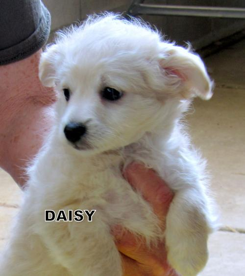 Daisy and Clover (Puppy)