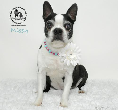Missy *Special Needs Senior*