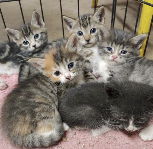 Kittens ready for home
