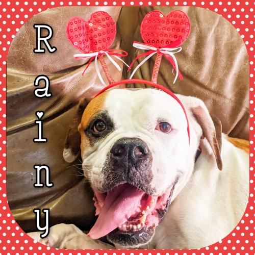 Rainy- adoption pending