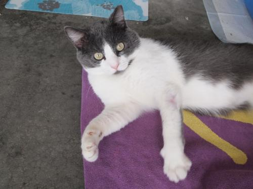 Cats For Adoption In Kansas City Area