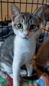 adoptable Cat in ME named HOPE