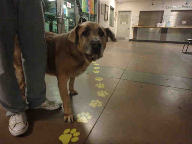 Popular Patty An Animal Control Officer At Winnebago County Animal Services