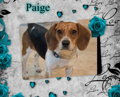Paige/SAGE Adopted !!