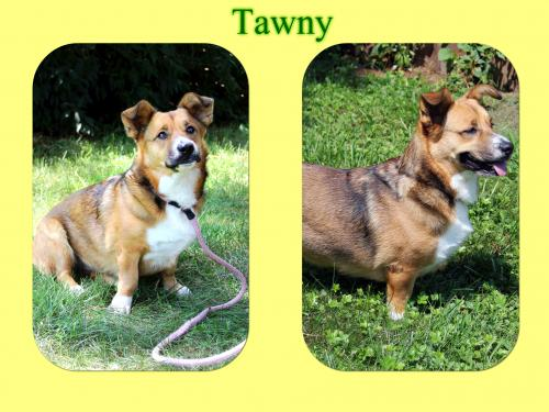 Tawny/Pebbles - ADOPTED!