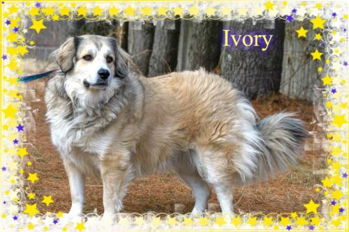 Ivory/ADOPTED!
