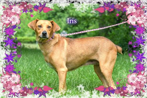 Iris/PENNY-ADOPTED!