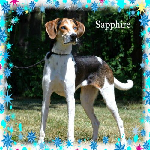 Sapphire/ADOPTED!!