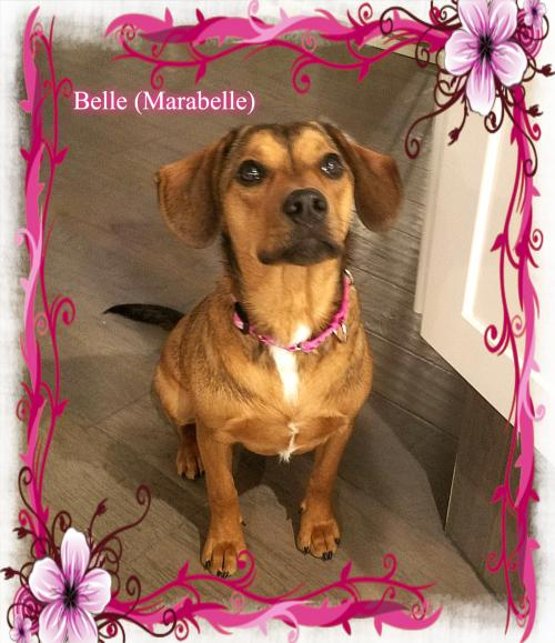 MaraBelle/ADOPTED!