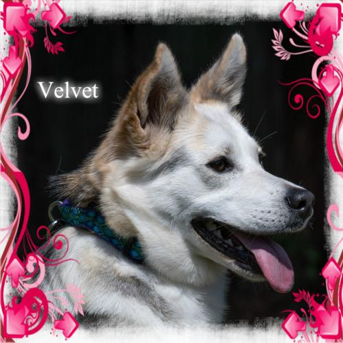 Velvet/ADOPTION PENDING!