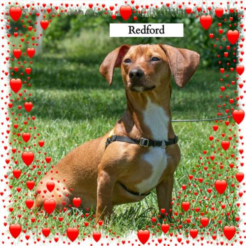 Redford/ADOPTED!