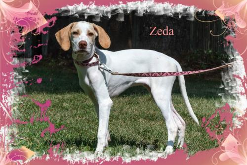 Zeda/ADOPTED!