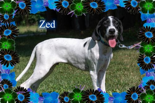 Zed/ADOPTED!!