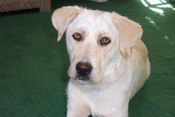 Hailey-ADOPTED!!
