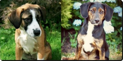 Betsy & Razzle/ADOPTED!
