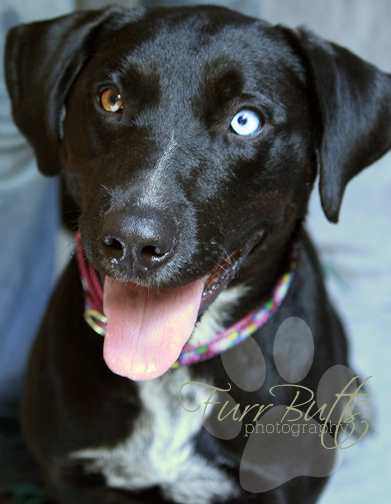 Bluberry/ADOPTED!!