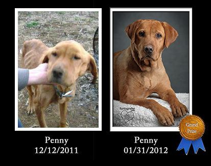 Penny/ADOPTED!