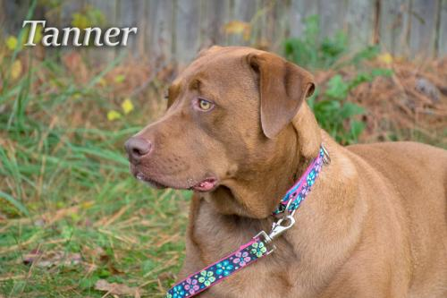 Tanner/Adopted!