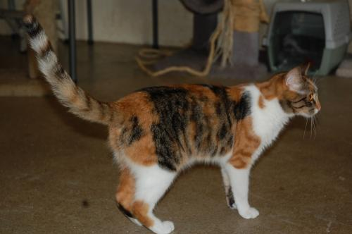 BARN CAT-AMY