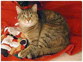 lost male cat maggy