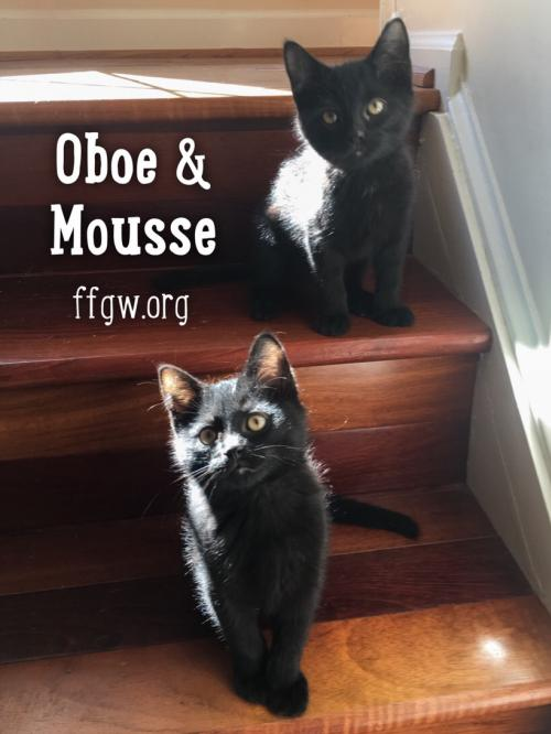 Oboe & Mousse
