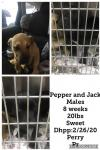 Pepper and Jack