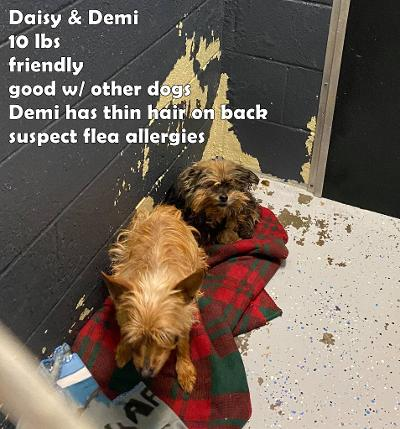 Daisy and Demi ON MEDICAL HOLD