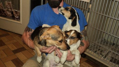 3 Little Beagle kids 2 ADOPTED
